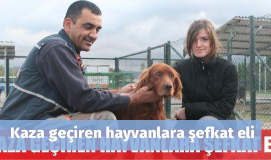 Kaza geçiren hayvanlara şefkat eli