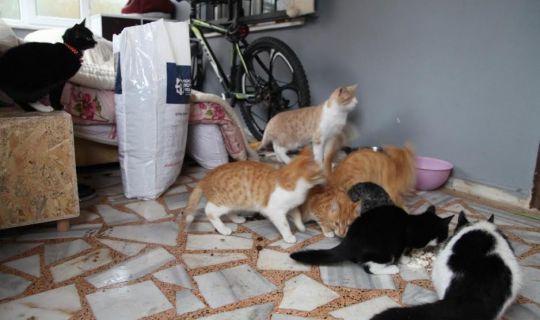Başiskele Belediyesi'nden, Sokak Hayvanlarına Mama Desteği