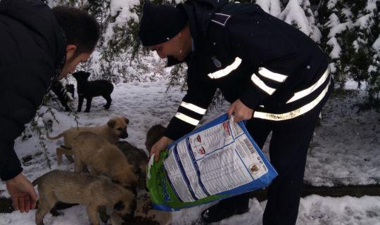 İzmit Belediyesi, sokak hayvanlarını unutmuyor