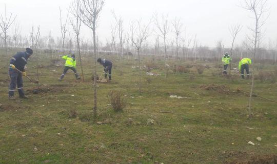Yukarı Hereke Rehabilitasyon alanında ağaçlandırma