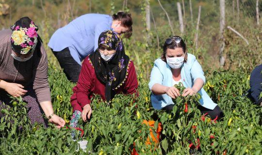 Hürriyet kullanılmayan tarım arazilerini kadınlara açıyor