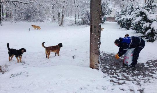 Körfez Belediyesi'nden Sokak hayvanlarına 'şefkat' eli