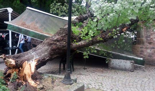 Fırtına, 30 yıllık ıhlamur ağacını yıktı!