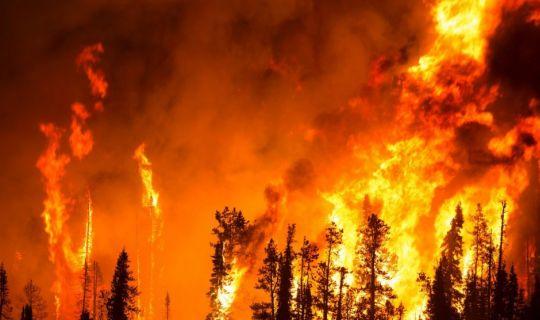 Körfez ilçesinde meydana gelen orman yangını