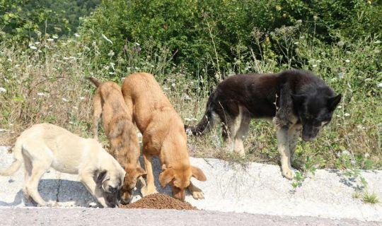 Sokak hayvanlarına 100 ton mama