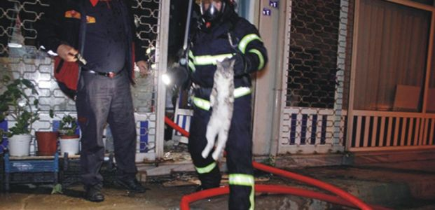 İşyeri yangınında kediler öldü