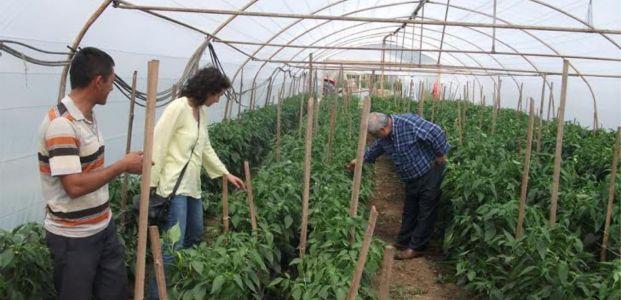 Sera naylonları ile kaliteli ve sağlıklı ürünler