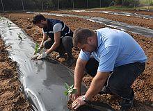 İzmit Belediyesi Aronya meyvesini toprakla buluşturdu
