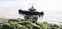 Başkan, deniz temizleme aracını inceledi
