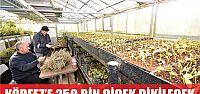 Körfez'e 250 bin çiçek dikilecek