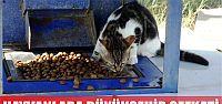 Sokak hayvanlarına Büyükşehir şefkati...