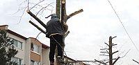 Yahya Kaptan'da ağaç direnişi sürüyor
