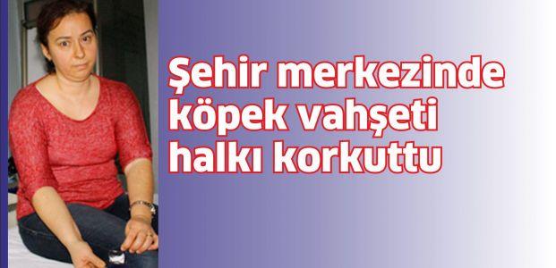 Yahya Kaptan'da köpek vahşeti!